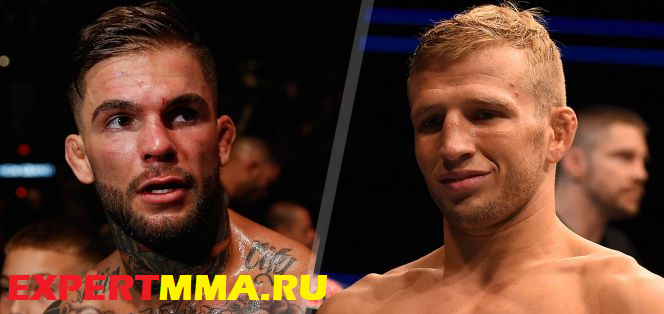 101515_ufc_Garbrandt_Dillashaw_split_pi_mp.vadapt.664.high.34.jpg